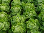 Prächtige Salate